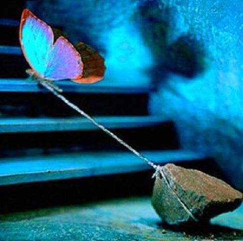 butterfly-rock (2)