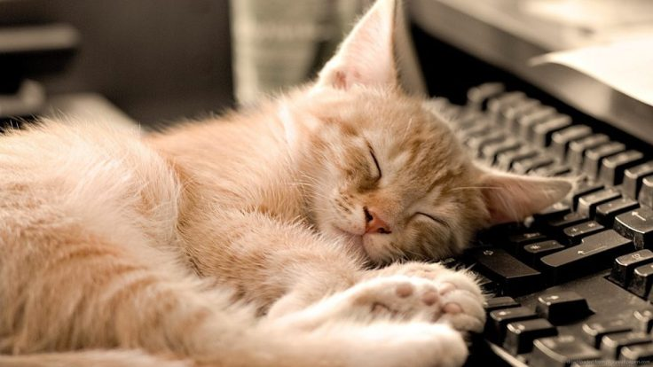 cat-napping-on-a-keyboard