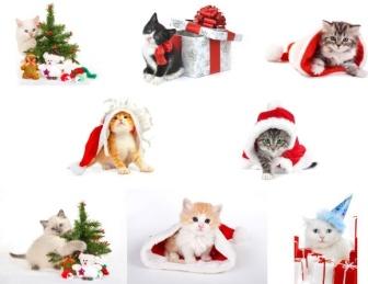 cat_christmas_hd_photo_gallery_168859