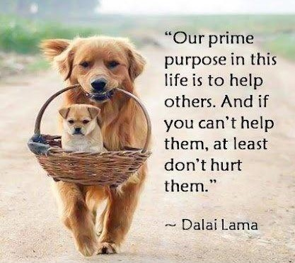 our-prime-purpose-in-this-life-is-to-help-others-and-if-you-cant-help-them-at-least-dont-hurt-them-quote-2